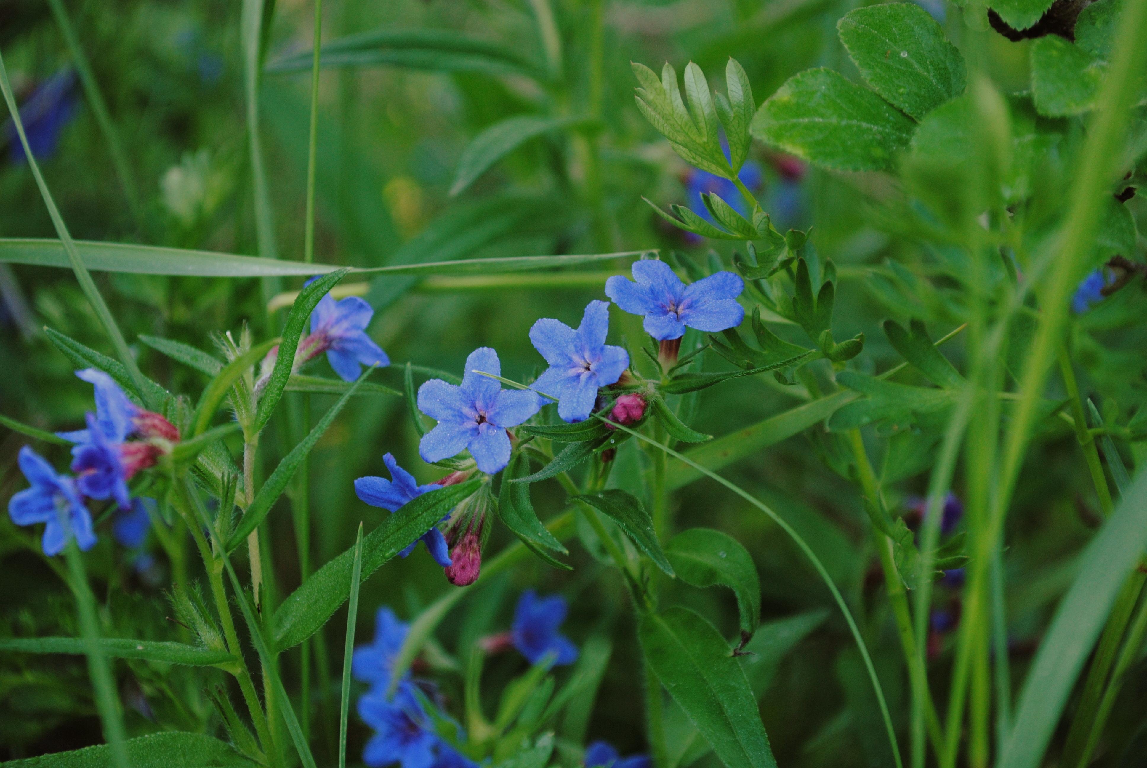 85207 Salvapantallas y fondos de pantalla Flores en tu teléfono. Descarga imágenes de Naturaleza, Hierba, Macro, Flores gratis