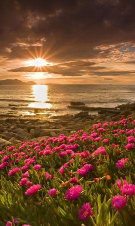 32274 скачать обои Пейзаж, Цветы, Закат, Пляж - заставки и картинки бесплатно