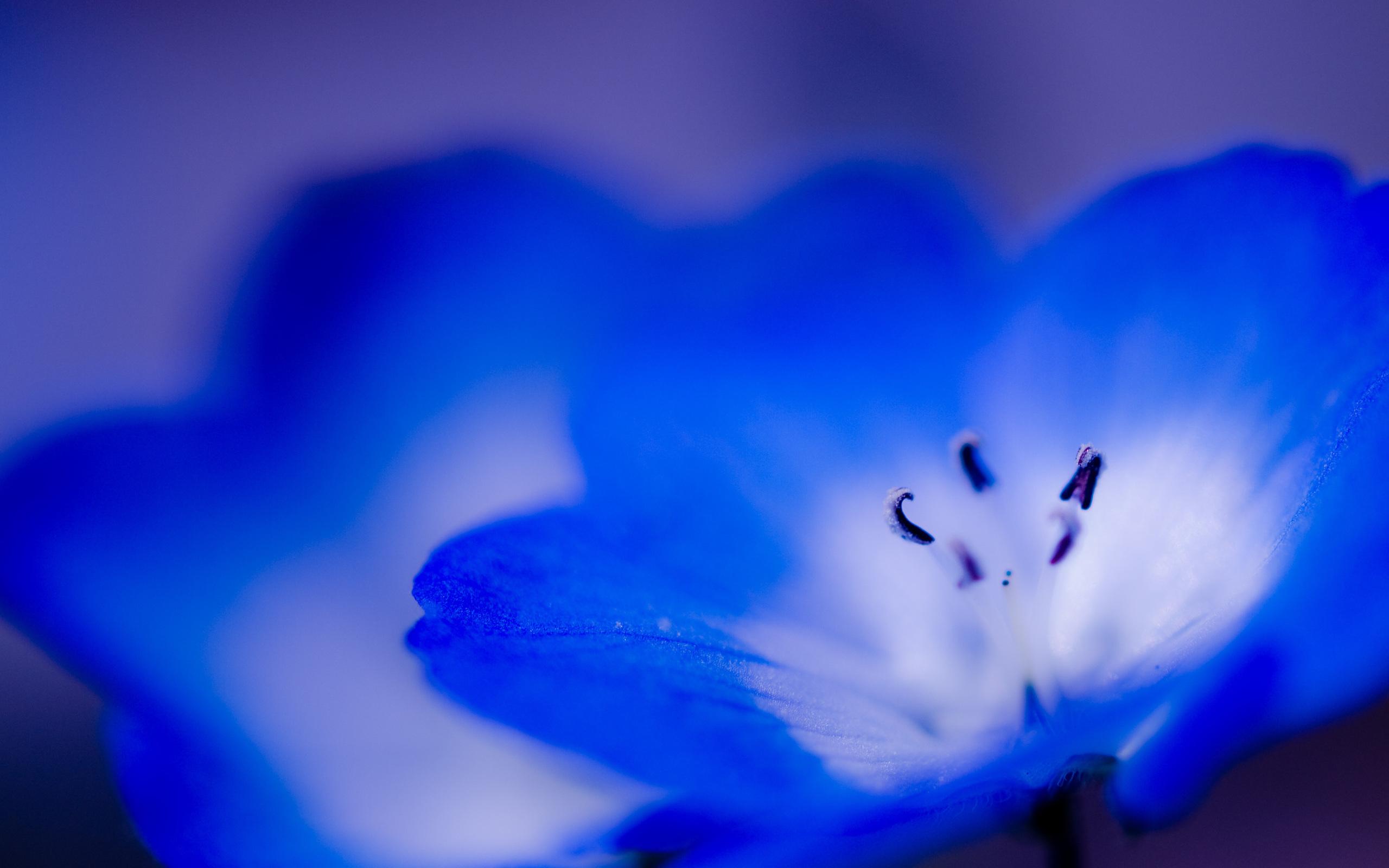 26461 скачать обои Растения, Цветы - заставки и картинки бесплатно