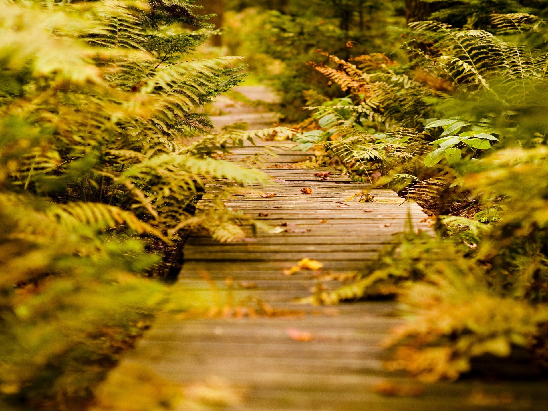 89285 download wallpaper Nature, Autumn, Leaves, Fern, Vegetation, Track screensavers and pictures for free