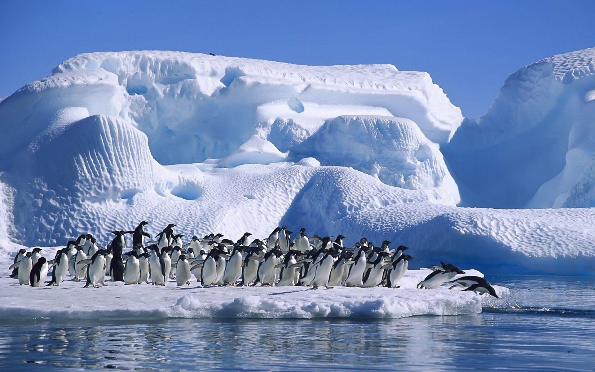 151870 Hintergrundbild herunterladen Tiere, Pinguins, Schnee, Herde, Prallen, Springen, Gletscher, Antarktis - Bildschirmschoner und Bilder kostenlos