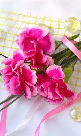 8266 скачать обои Растения, Цветы, Гвоздики - заставки и картинки бесплатно