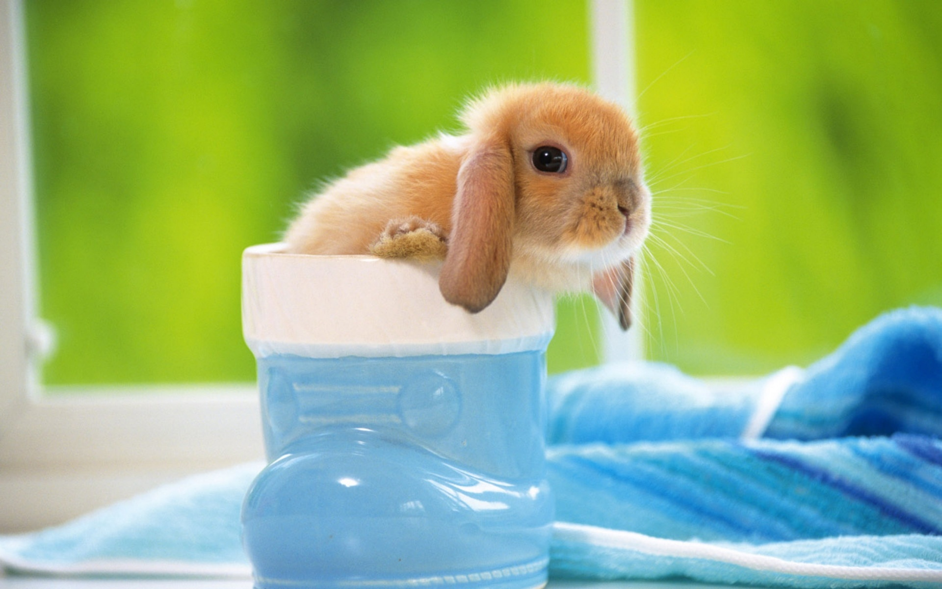 20362 download wallpaper Animals, Rabbits screensavers and pictures for free