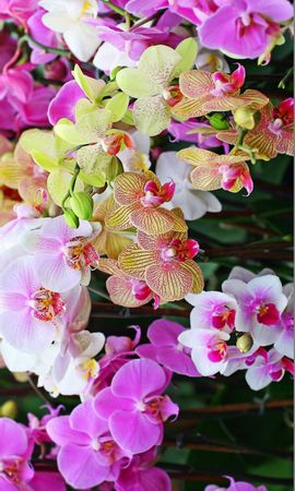 20536 скачать обои Растения, Цветы - заставки и картинки бесплатно