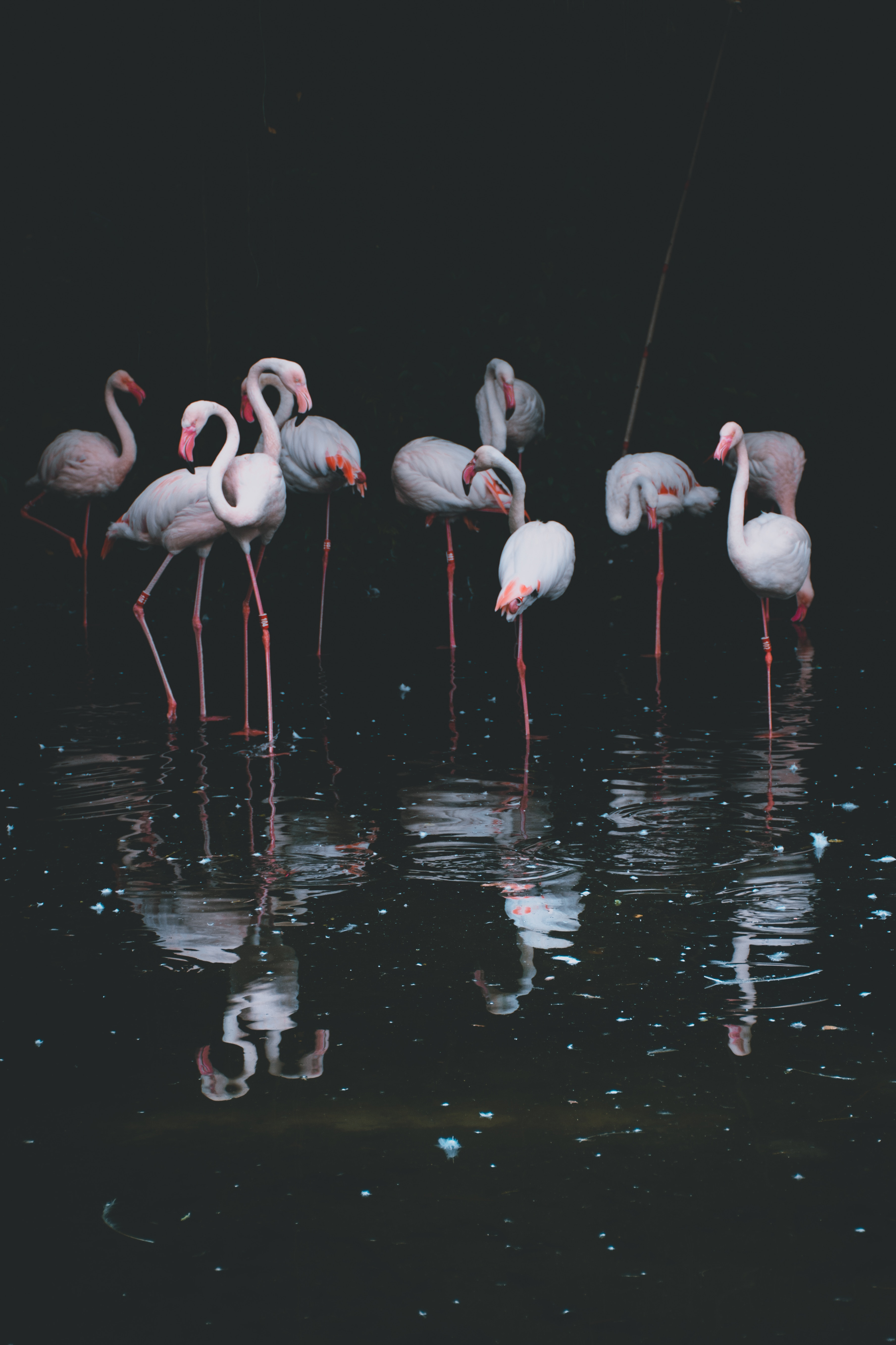 61938 Hintergrundbild herunterladen Vögel, Wasser, Flamingo, Reflexion, Dunkel, Becken - Bildschirmschoner und Bilder kostenlos