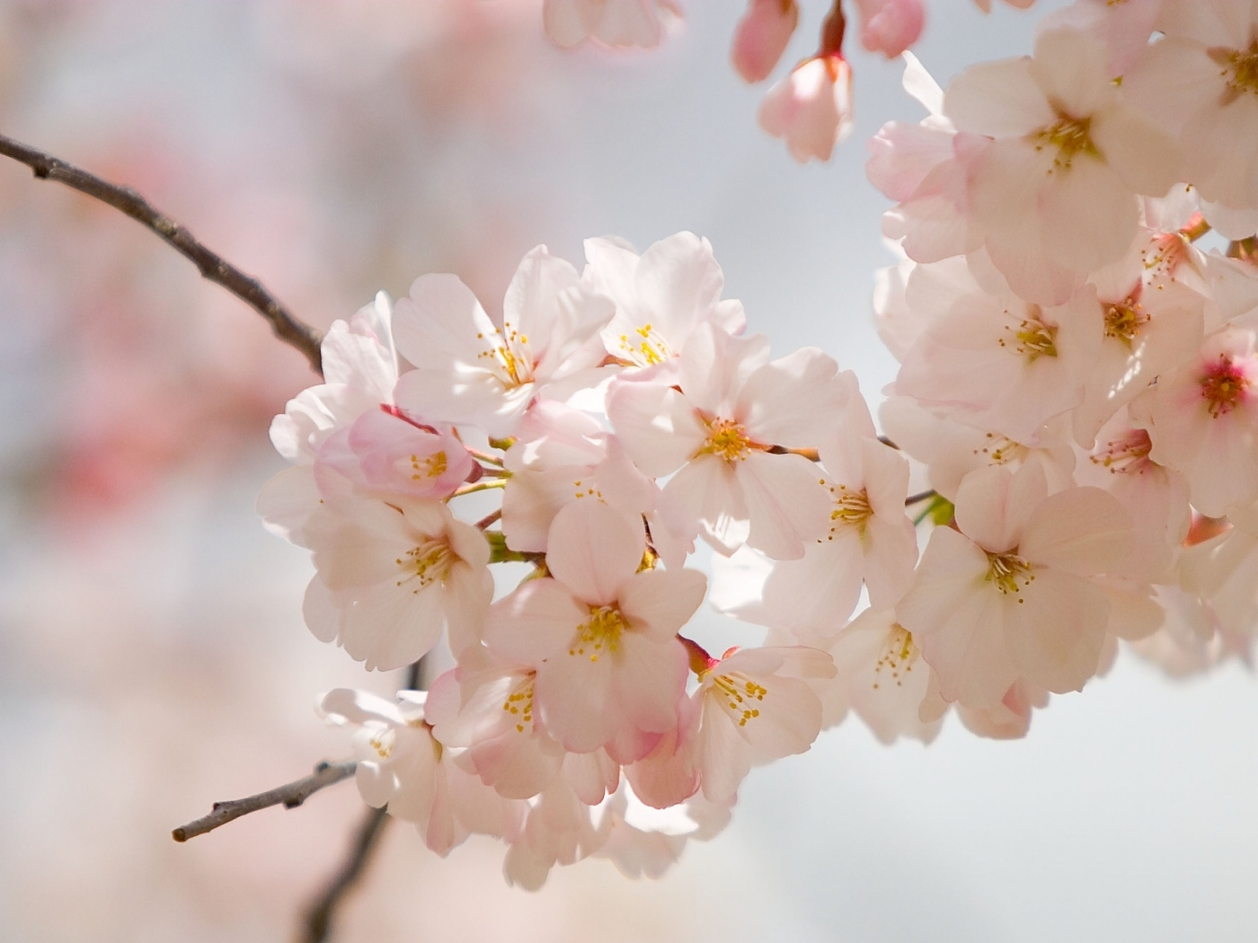 25758 скачать обои Растения, Цветы, Деревья - заставки и картинки бесплатно
