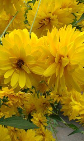 24832 скачать обои Растения, Цветы - заставки и картинки бесплатно