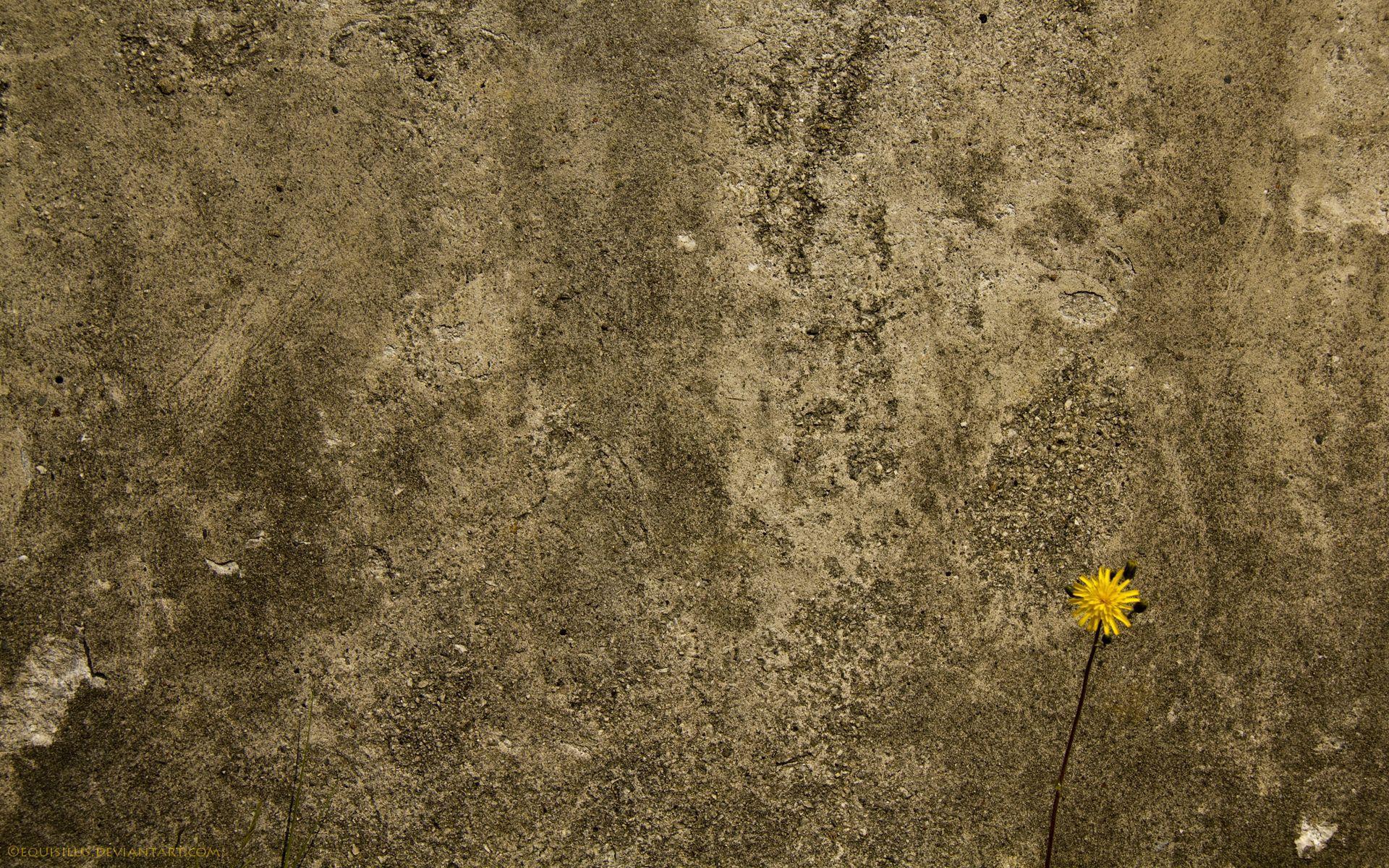 108164 baixar papel de parede Fundo, Flor, Textura, Texturas, Muro, Parede, Concreto - protetores de tela e imagens gratuitamente
