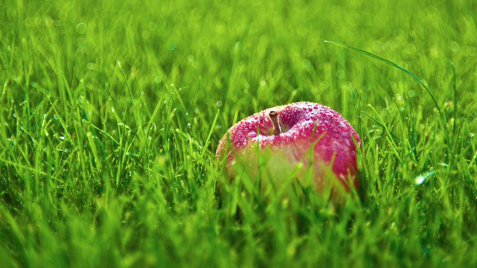 131970 download wallpaper Apple, Food, Grass, Drops screensavers and pictures for free