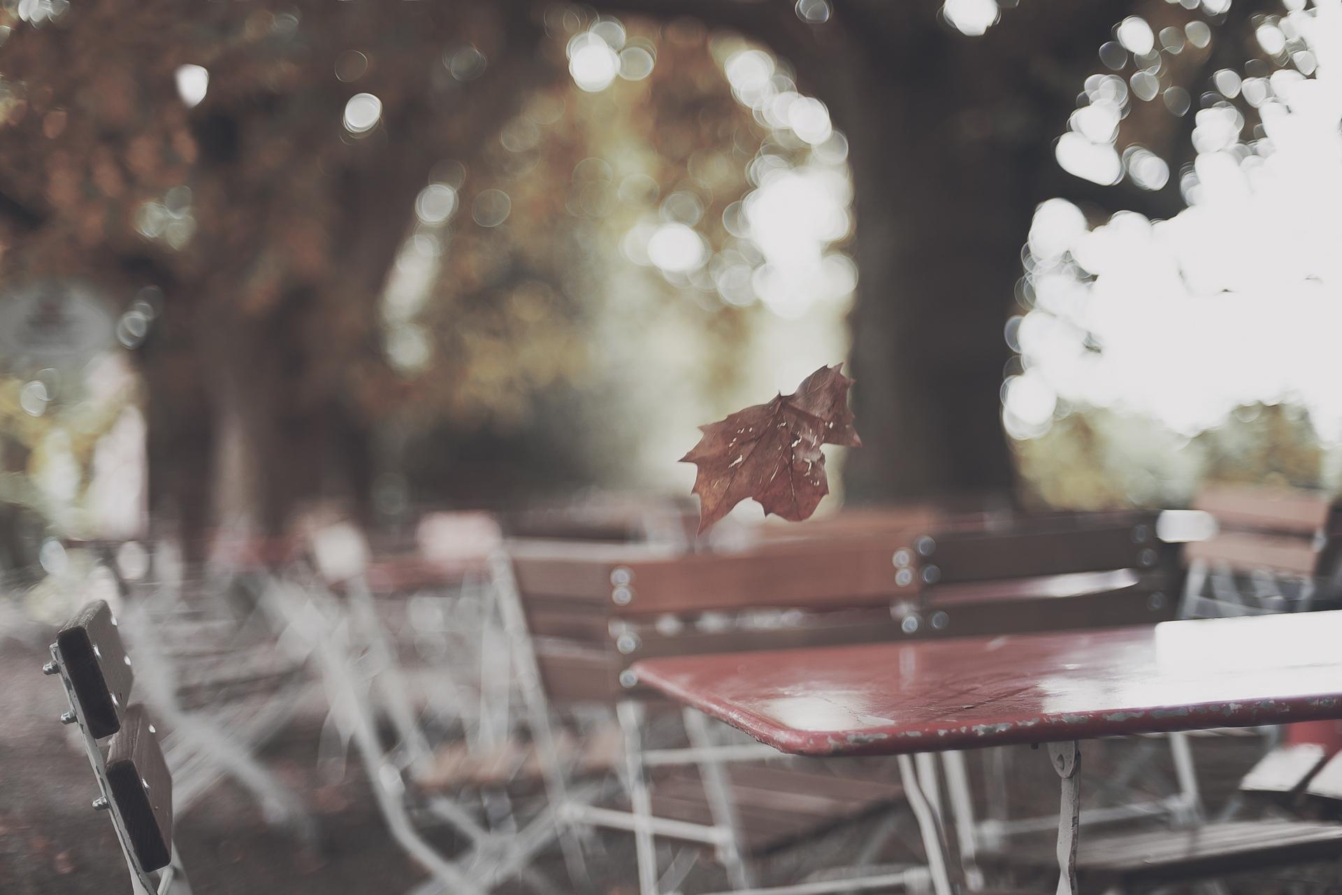 113004 скачать обои Разное, Парк, Стол, Лист, Осень - заставки и картинки бесплатно