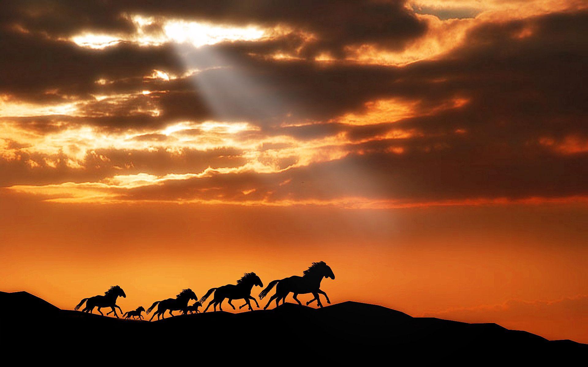 142573 скачать обои Животные, Лошади, Табун, Закат, Силуэты, Бежать - заставки и картинки бесплатно
