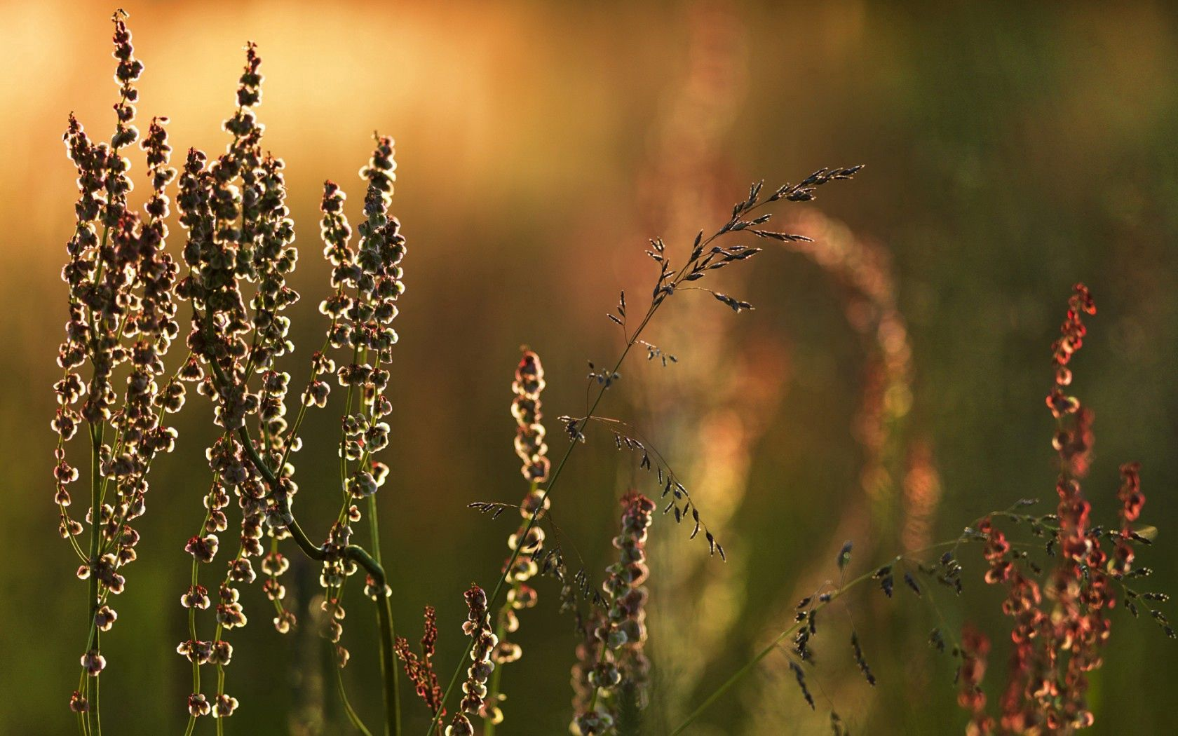 51794 download wallpaper Macro, Meadow, Blade Of Grass, Blade, Nature screensavers and pictures for free