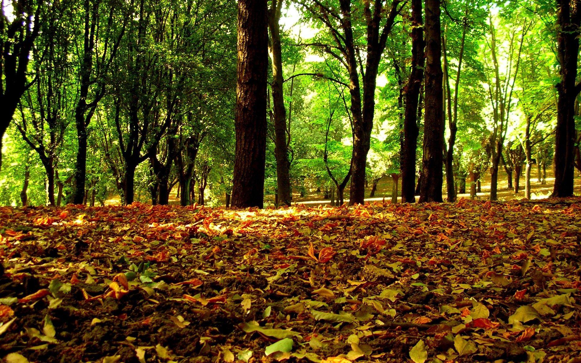 111907 скачать обои Осень, Листья, Природа, Деревья, Трава - заставки и картинки бесплатно