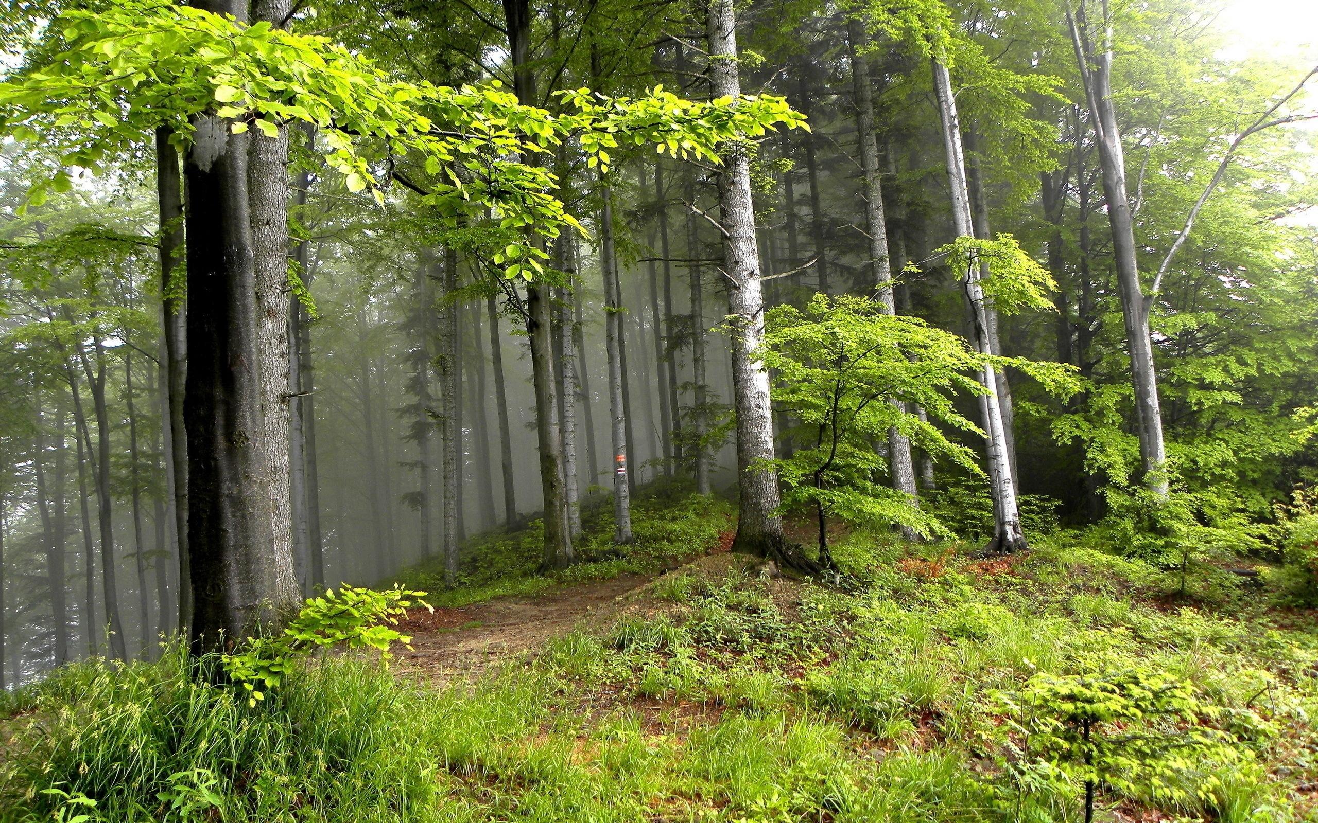 26366 скачать обои Пейзаж, Деревья, Трава - заставки и картинки бесплатно