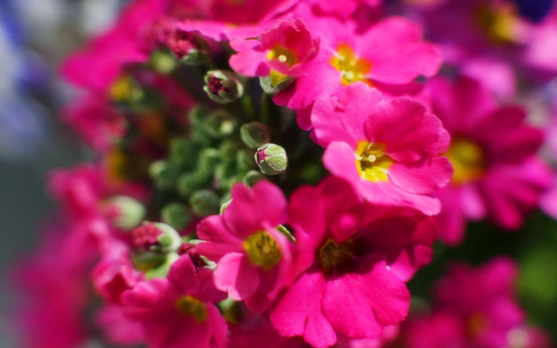 6460 скачать обои Растения, Цветы - заставки и картинки бесплатно