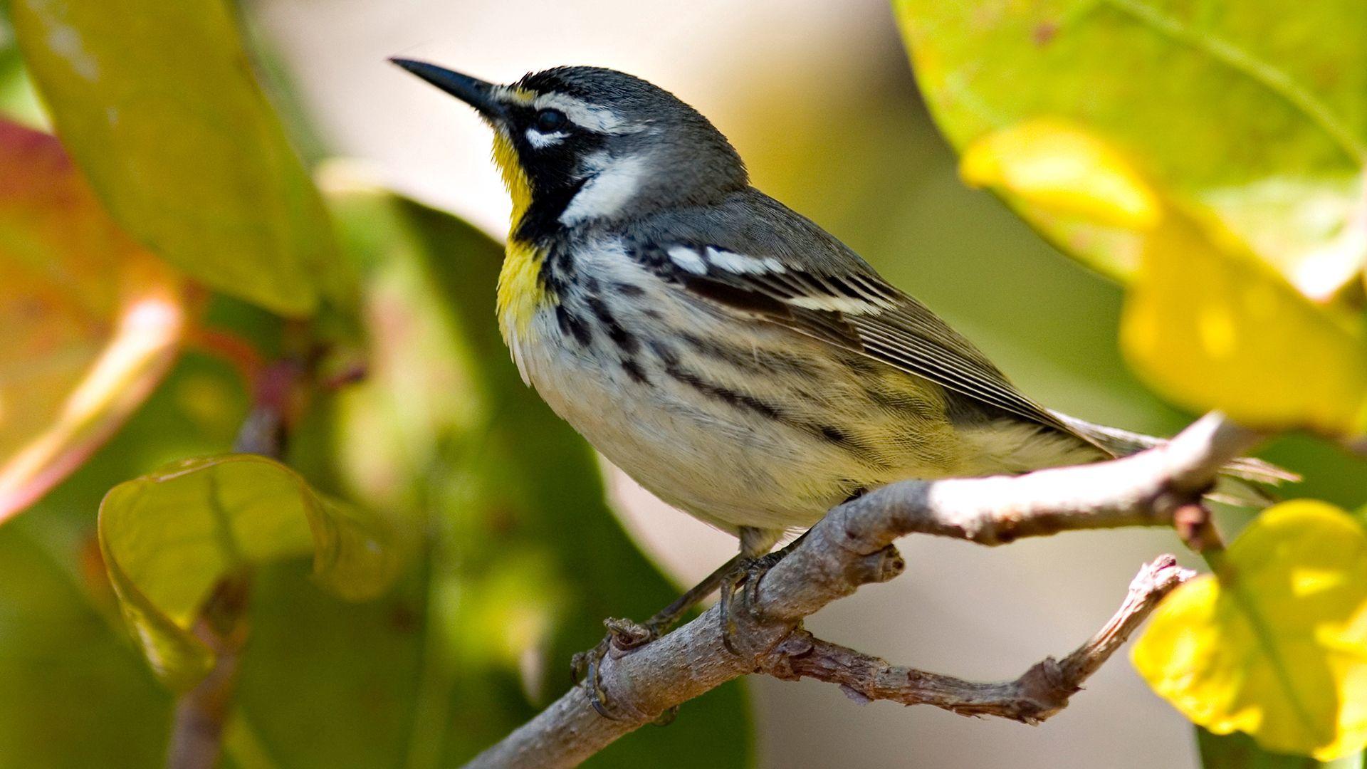 88996 Hintergrundbild herunterladen Tiere, Blätter, Vogel, Schnabel, Ast, Zweig - Bildschirmschoner und Bilder kostenlos