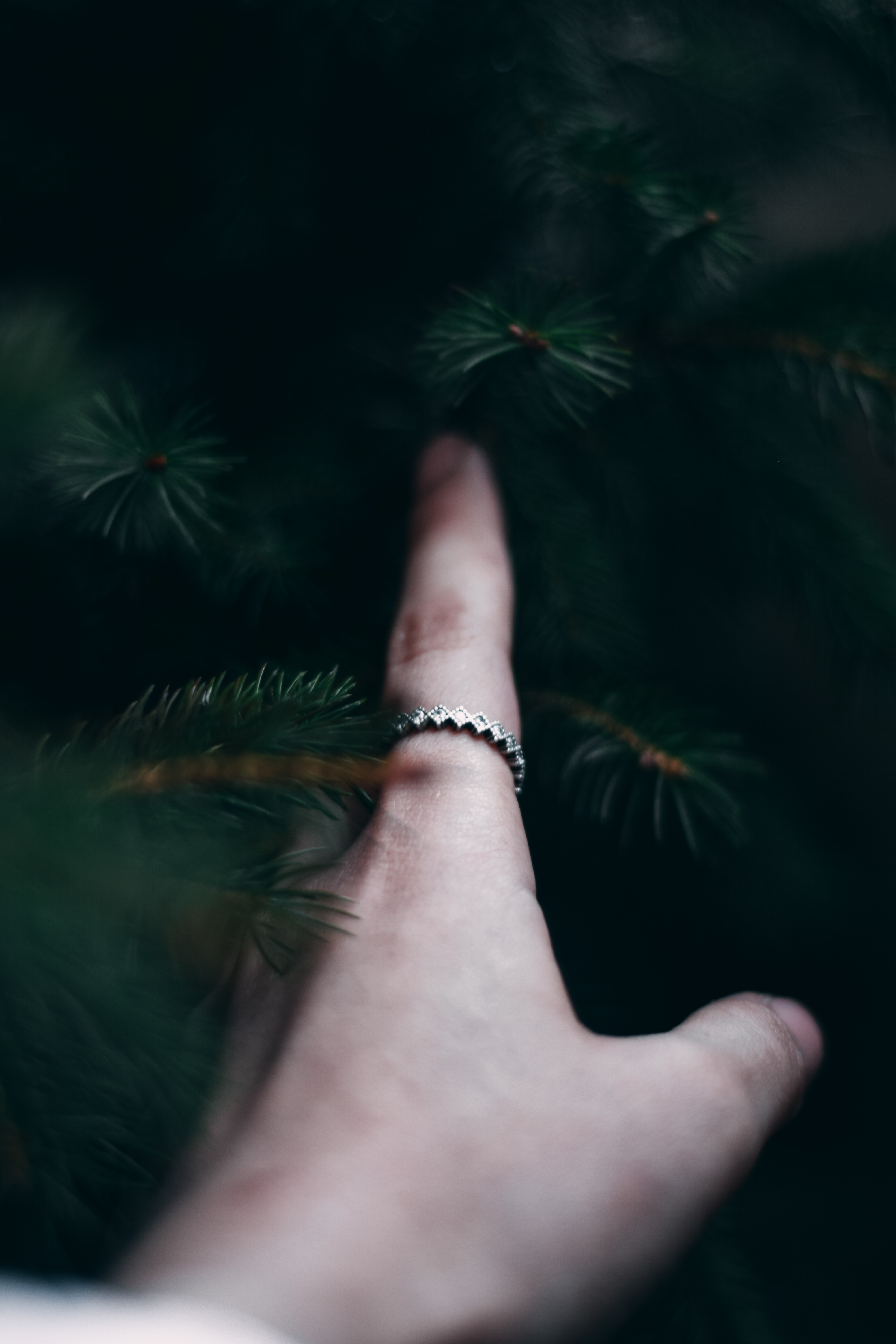 139827 download wallpaper Miscellanea, Miscellaneous, Hand, Branches, Spruce, Fir, Finger, Touching, Touch screensavers and pictures for free