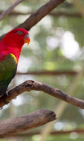 125638 baixar papel de parede Animais, Papagaios, Pássaro, Brilhante, Exótico - protetores de tela e imagens gratuitamente