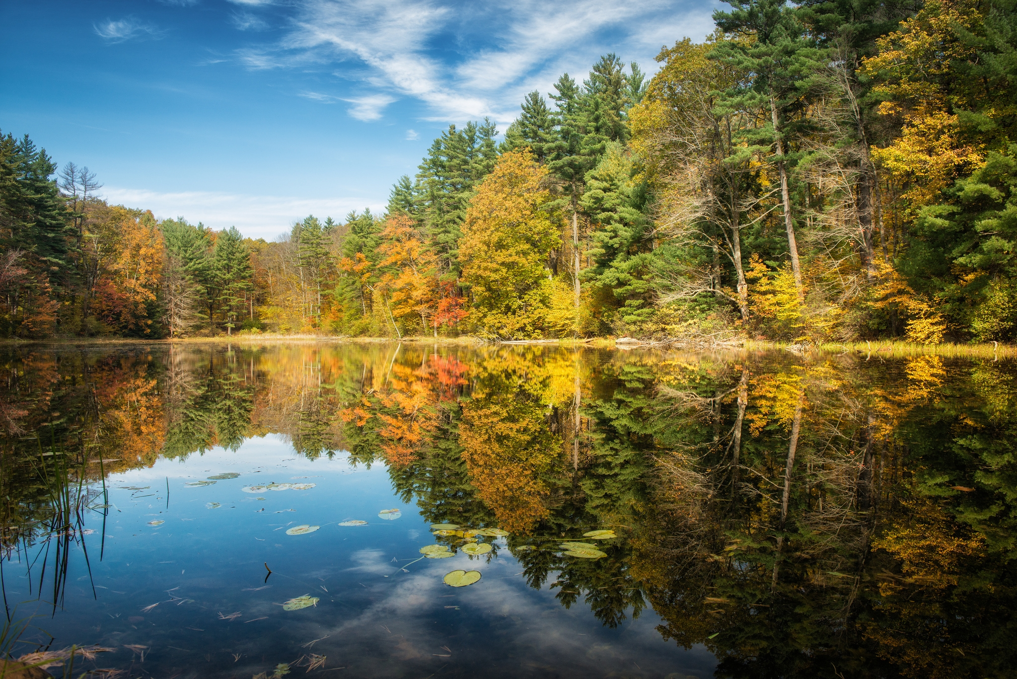 125530 скачать обои Осень, Лес, Природа, Деревья, Озеро, Отражение - заставки и картинки бесплатно