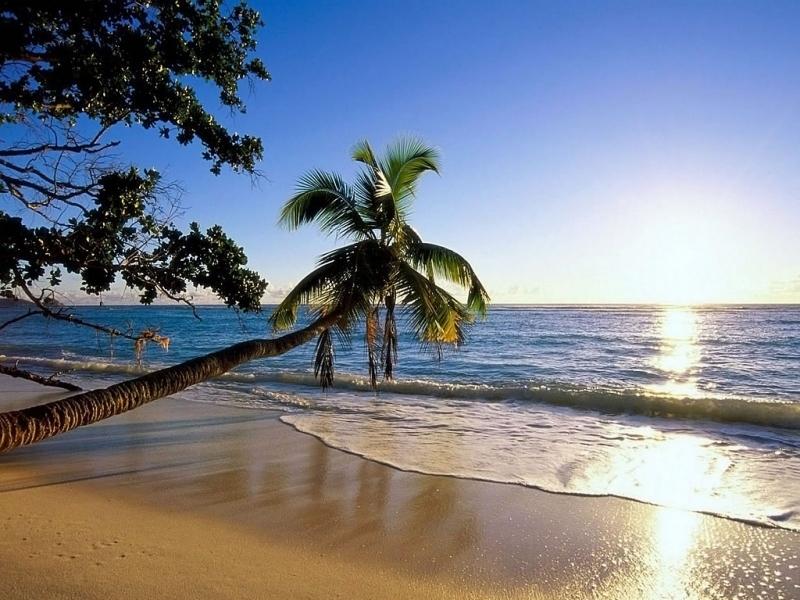 43065壁紙のダウンロード風景, 海, ビーチ, パームス-スクリーンセーバーと写真を無料で