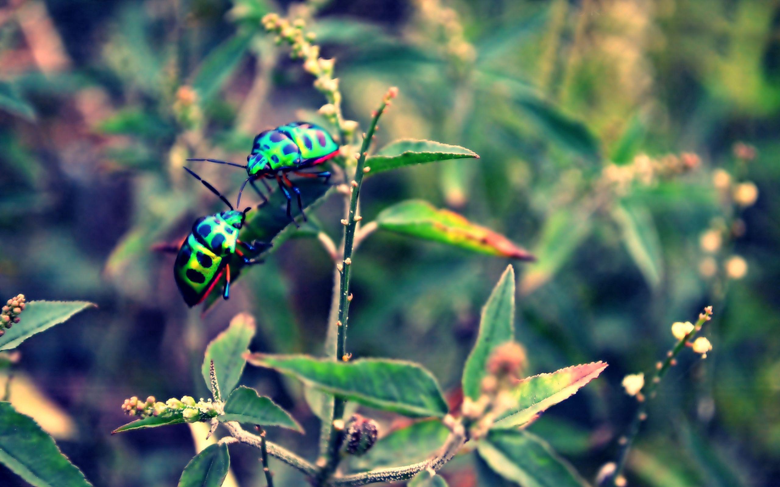 155465 Salvapantallas y fondos de pantalla Insectos en tu teléfono. Descarga imágenes de Macro, Insectos, Insecto, Hierba, Planta gratis