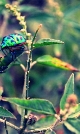 155465 télécharger le fond d'écran Macro, Scarabées, Insecte, Herbe, Plante, Planter - économiseurs d'écran et images gratuitement