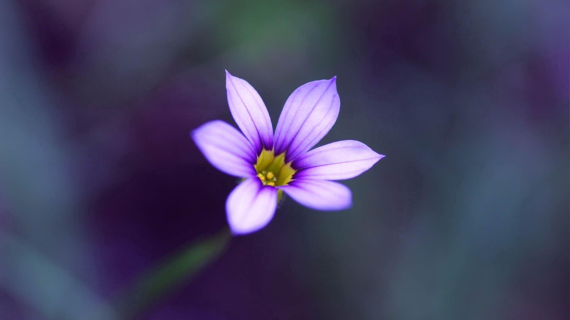 77646 Screensavers and Wallpapers Lilac for phone. Download Lilac, Flower, Macro, Stripes, Streaks pictures for free