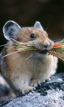 50014 baixar papel de parede Animais, Hamsters - protetores de tela e imagens gratuitamente