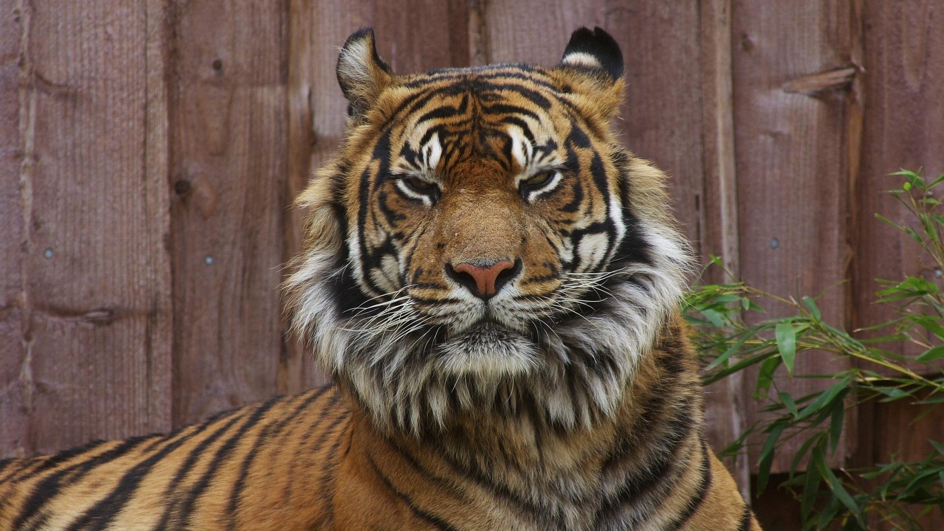 48811 скачать обои Животные, Львы - заставки и картинки бесплатно