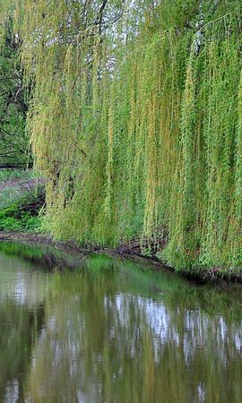 25594 скачать обои Пейзаж, Река, Деревья - заставки и картинки бесплатно