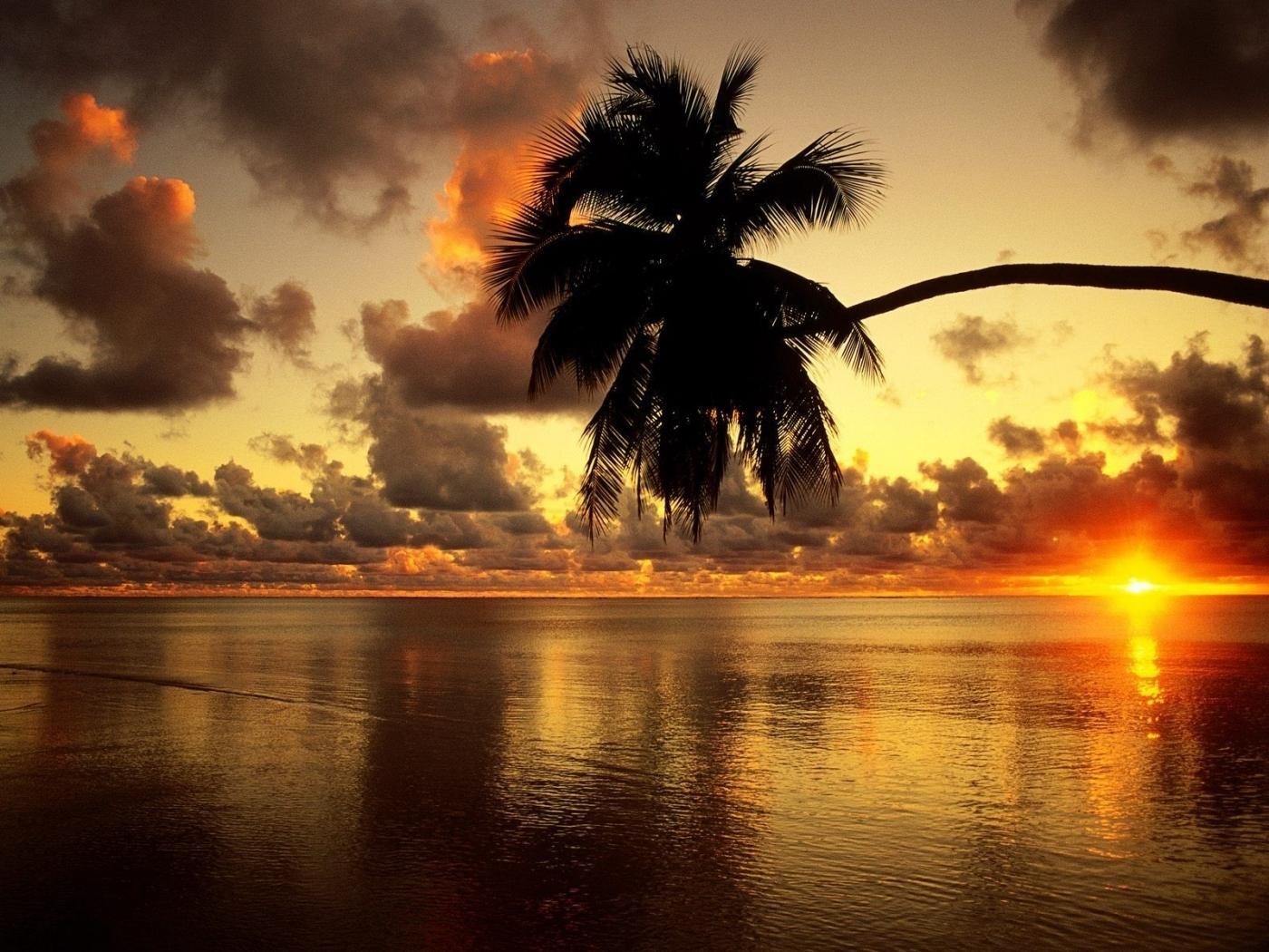 23553 скачать обои Пейзаж, Закат, Море, Пальмы - заставки и картинки бесплатно