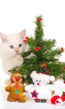 8766 descargar fondo de pantalla Vacaciones, Animales, Gatos, Año Nuevo, Juguetes, Abetos, Navidad: protectores de pantalla e imágenes gratis