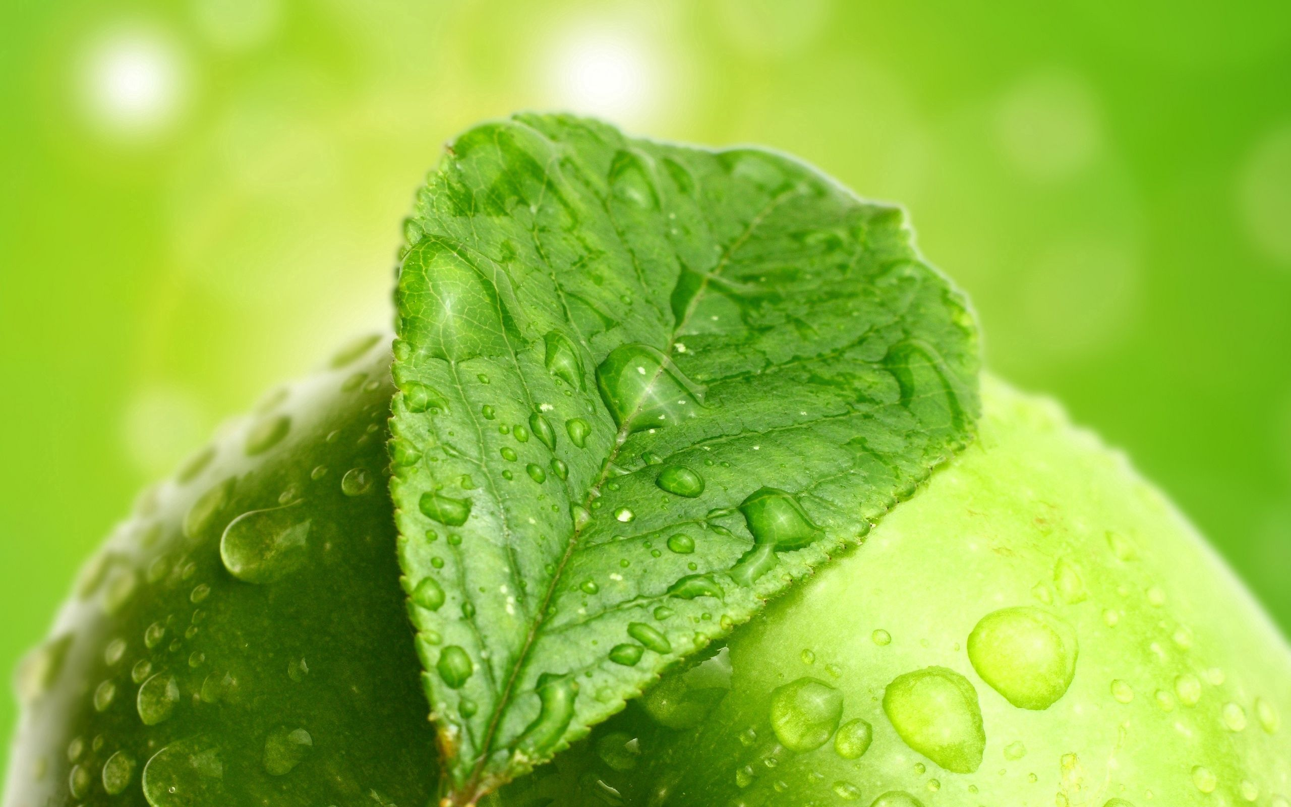 134520 download wallpaper Macro, Sheet, Leaf, Drops, Apple screensavers and pictures for free