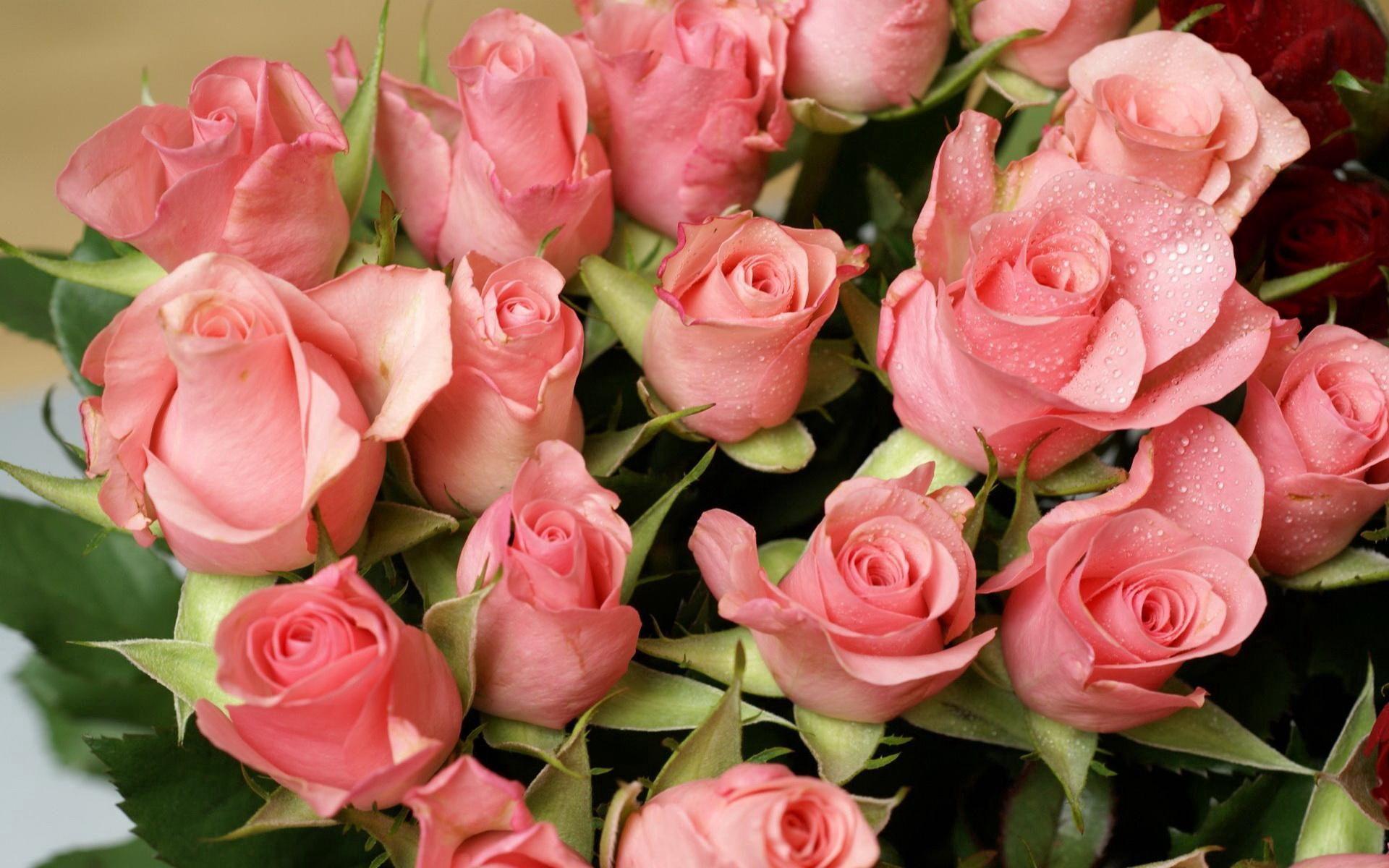62815 скачать обои Цветы, Букет, Капли, Нежность, Розы - заставки и картинки бесплатно