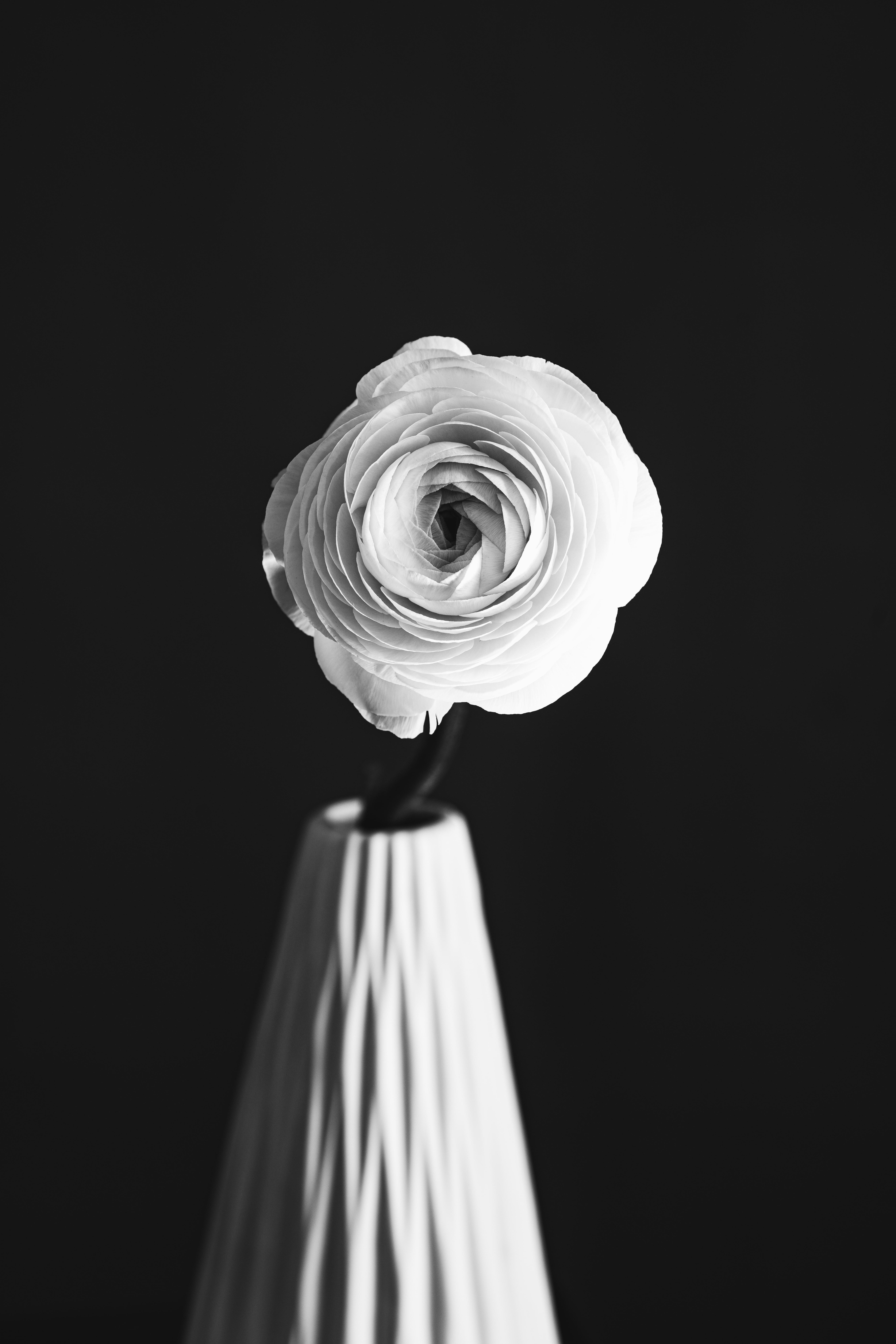 84555 baixar papel de parede Flores, Flor Rosa, Rosa, Flor, Pétalas, Vaso, Preto E Branco, Preto-E-Branco, Bw, Chb - protetores de tela e imagens gratuitamente