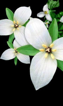 26979 скачать обои Растения, Цветы, Фон - заставки и картинки бесплатно