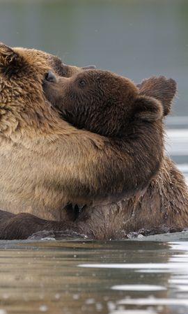 45006 baixar papel de parede Animais, Bears - protetores de tela e imagens gratuitamente