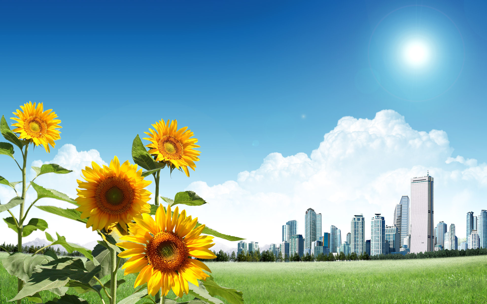 10819 免費下載壁紙 植物, 花卉, 向日葵 屏保和圖片