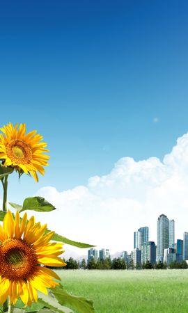 10819 скачать обои Растения, Цветы, Подсолнухи - заставки и картинки бесплатно