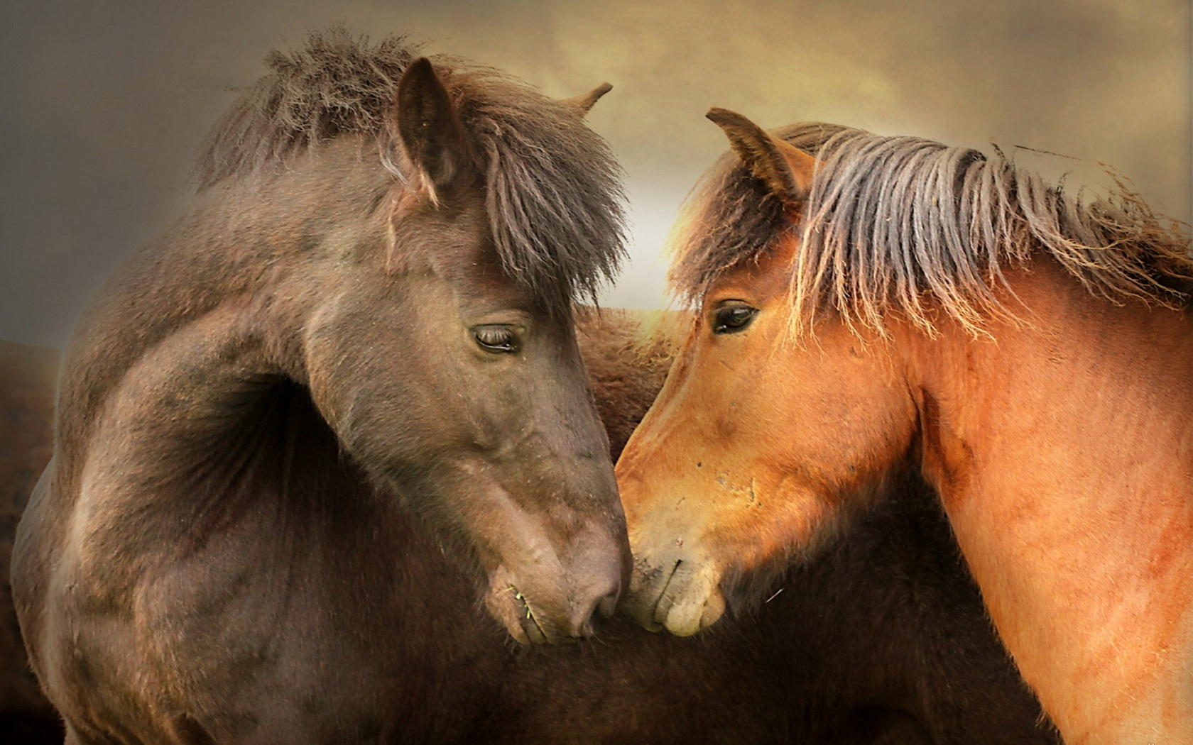 41972 download wallpaper Animals, Horses screensavers and pictures for free