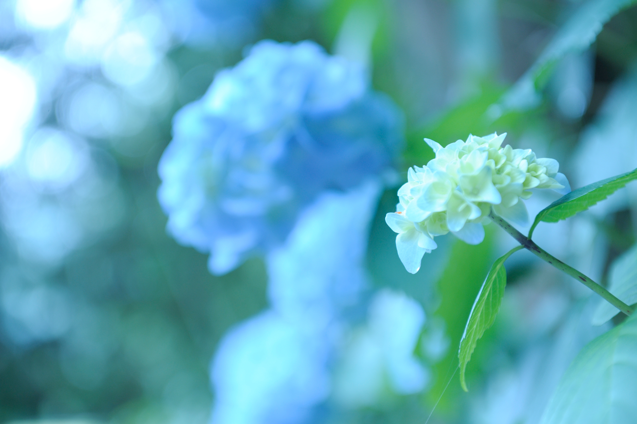 Descarga gratuita de fondo de pantalla para móvil de Flores, Plantas.
