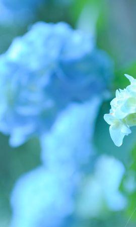 15874 descargar fondo de pantalla Plantas, Flores: protectores de pantalla e imágenes gratis