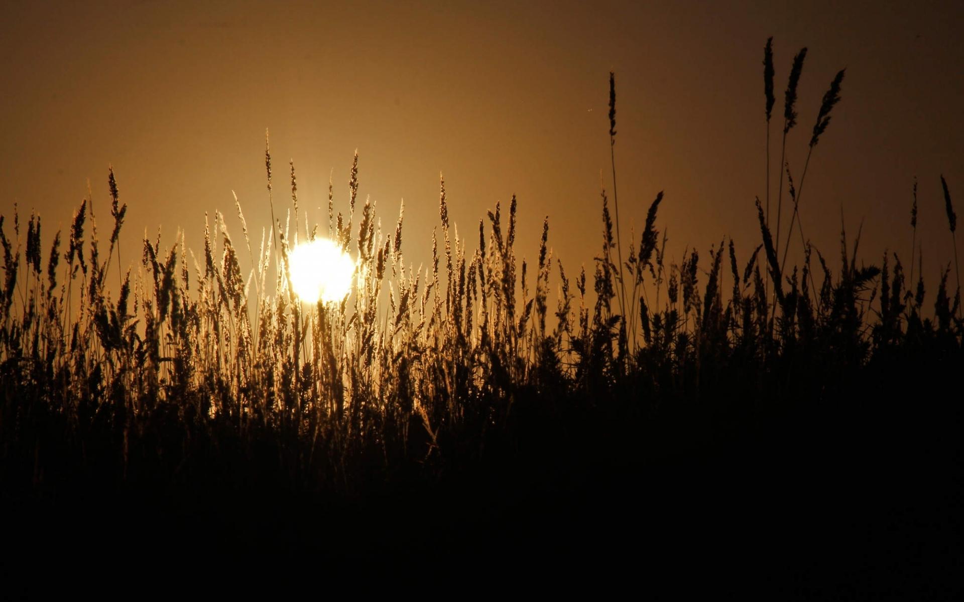 23537 скачать обои Пейзаж, Поля, Солнце, Пшеница - заставки и картинки бесплатно