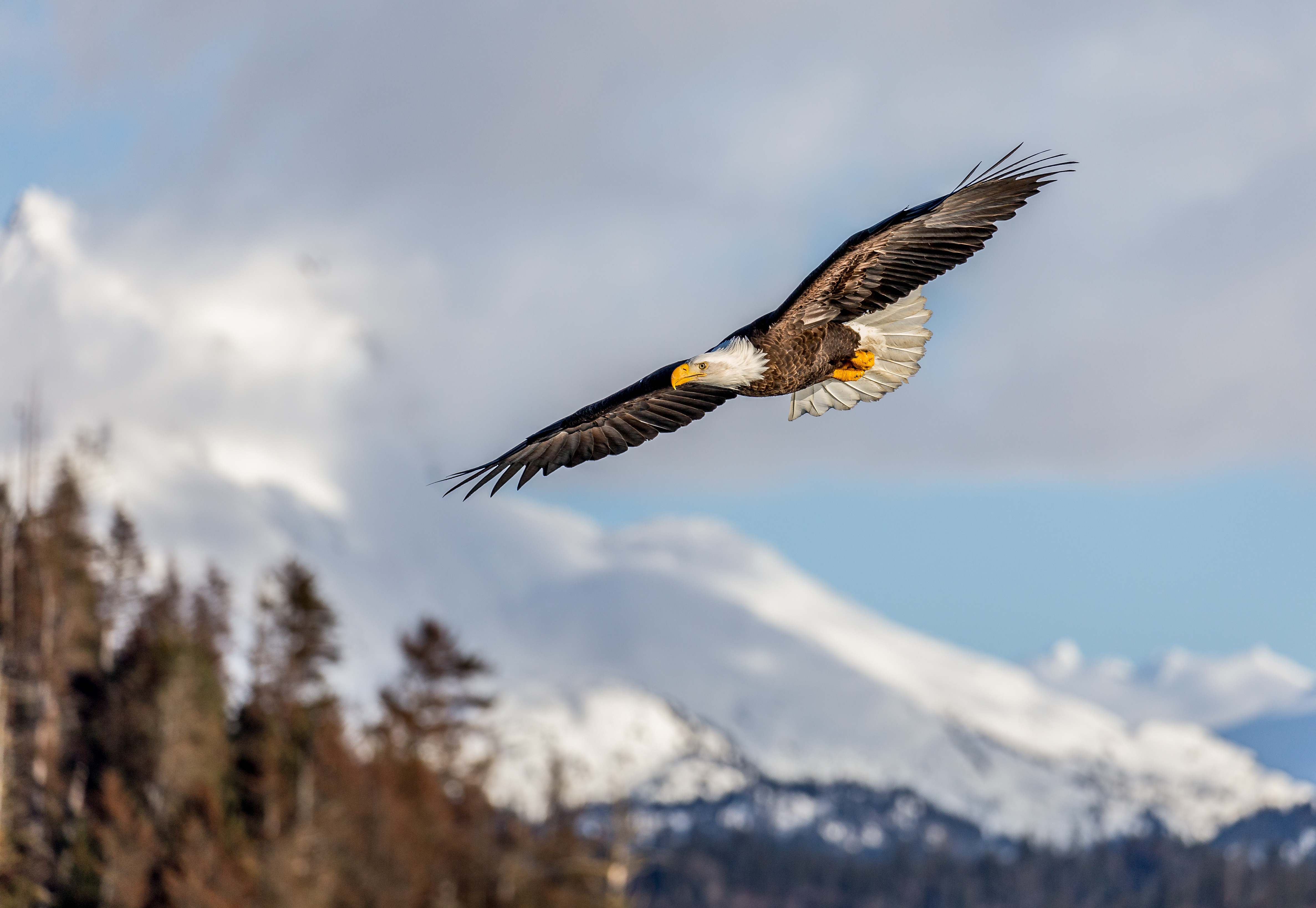 Best Eagle wallpapers for phone screen