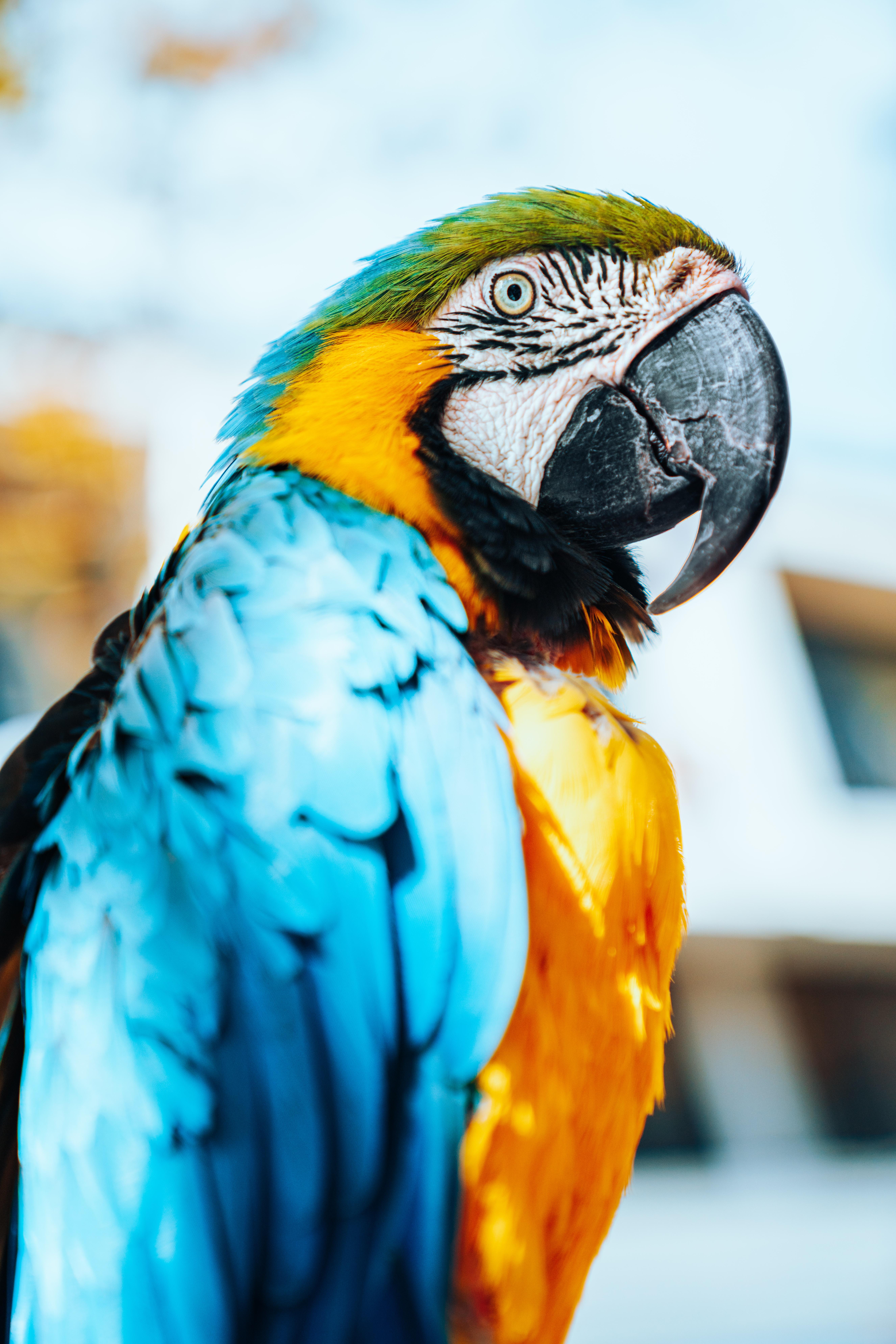 155876 télécharger le fond d'écran Perroquets, Animaux, Plumes, Oiseau, Multicolore, Hétéroclite, Ara - économiseurs d'écran et images gratuitement