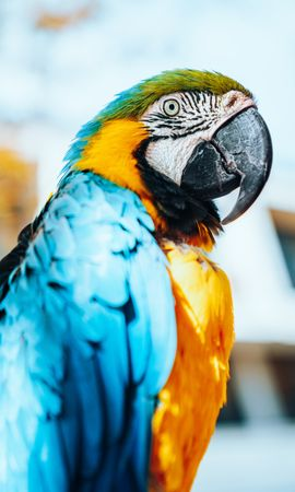 155876 download wallpaper Animals, Macaw, Parrots, Bird, Multicolored, Motley, Feather screensavers and pictures for free