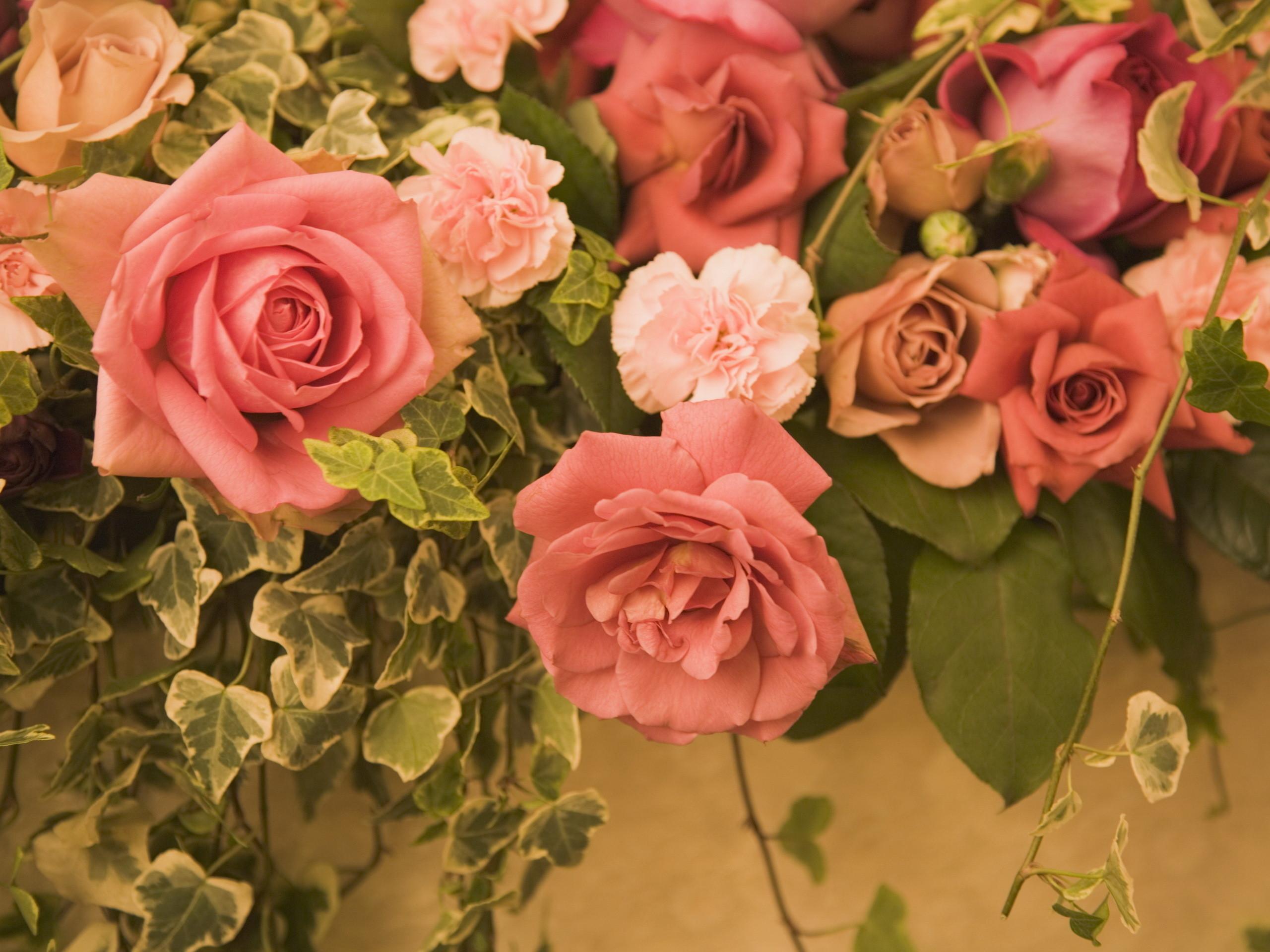 22688 télécharger le fond d'écran Plantes, Fleurs, Roses - économiseurs d'écran et images gratuitement