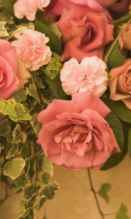 22688 скачать обои Растения, Цветы, Розы - заставки и картинки бесплатно
