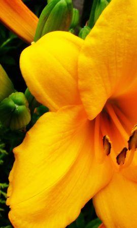 10010 скачать обои Растения, Цветы, Лилии - заставки и картинки бесплатно