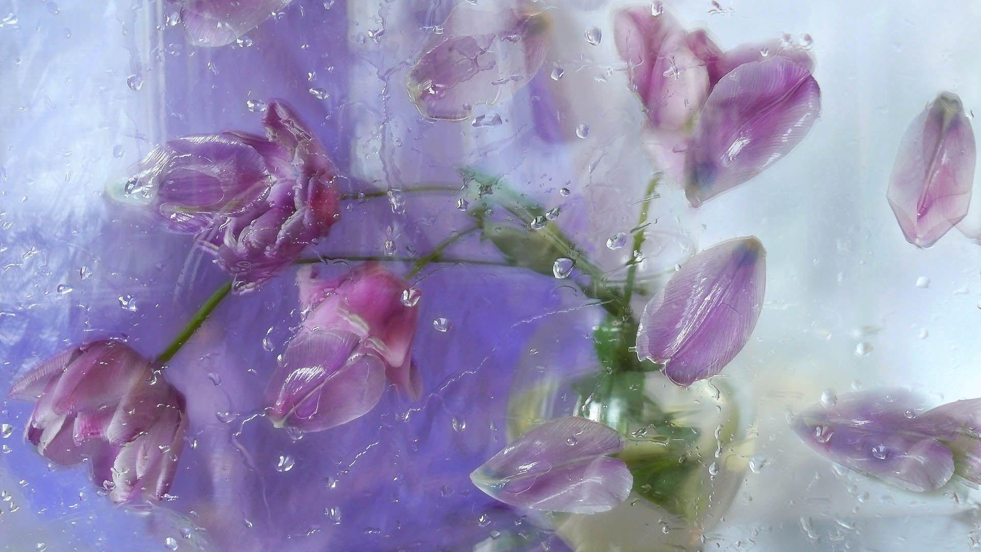 74275 скачать обои Цветы, Лепестки, Растение - заставки и картинки бесплатно